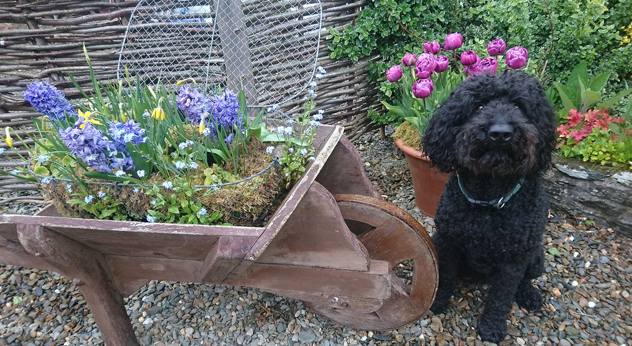 ECO & DOG FRIENDLY HOLIDAY COTTAGES