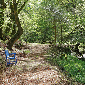 Woodland, Dog friendly cottages, Cottages with hot tubs wales wales, west wales holiday cottages
